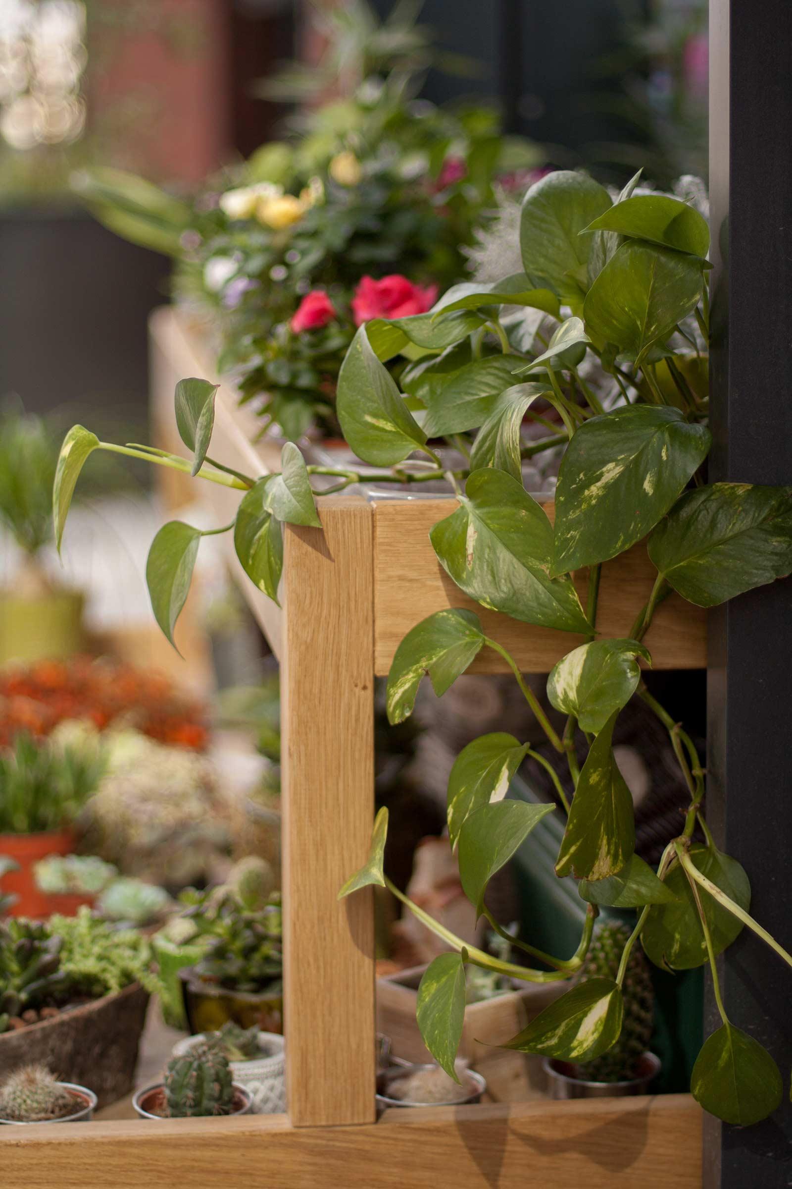 Dreveny vozik z masivu pre kvetinarstvo